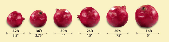 Pomegranate Sizes