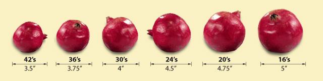 Pomegranate Sizes
